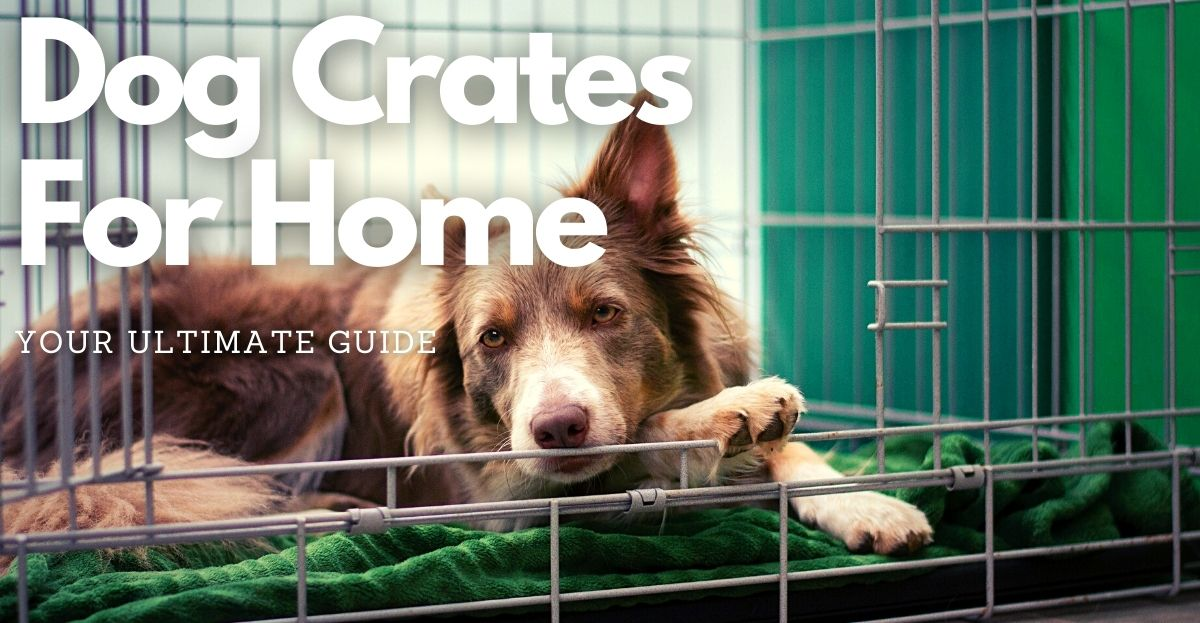 dog crates for home